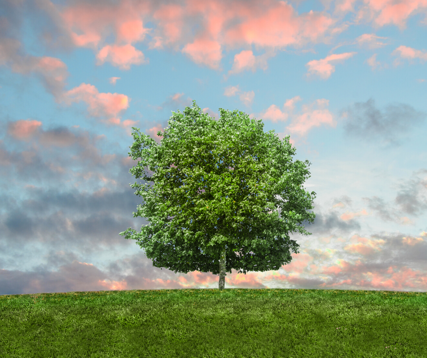 World Environment Day 2021   Reimagine, Recreate, Restore